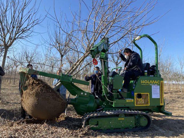 进口挖树机